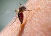 mosquito tigre zaragoza