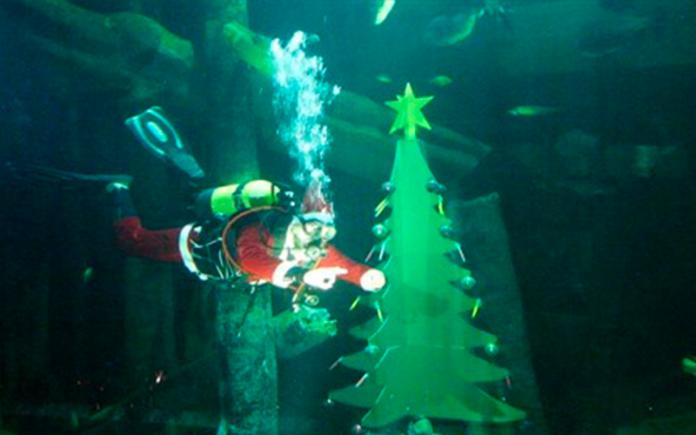 acuario-de-zaragoza