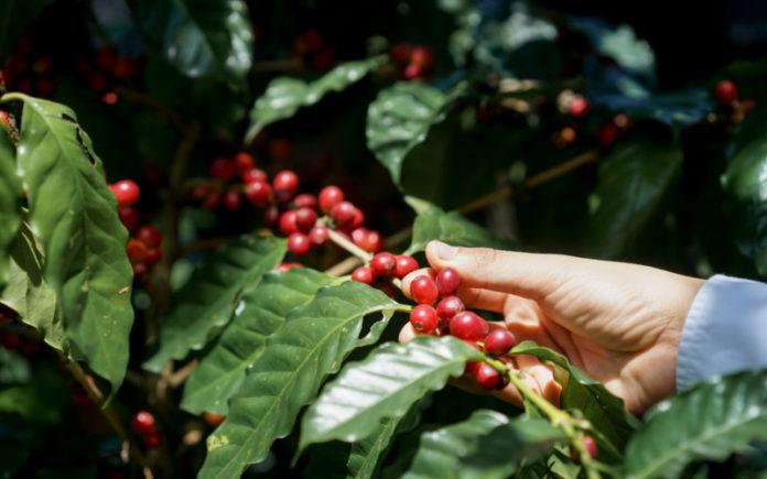 mano-cogiendo-fruto