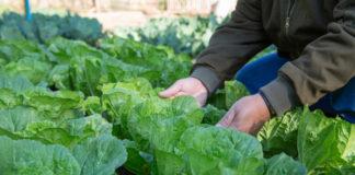 I Estrategia de Alimentación Sostenible y Saludable