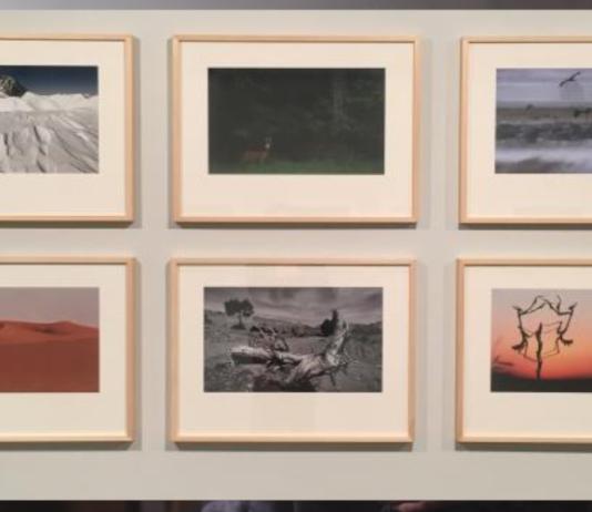 Exposición Foto-Síntesis
