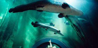 reabre el acuario de zaragoza