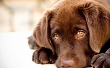 adopcion de animales en zaragoza