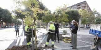 los operarios inician la plantacion de arboles