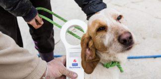 Zaragoza mascotas atención gratuita