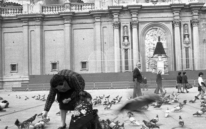 Zaragoza palomas