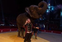 Zaragoza circo animales