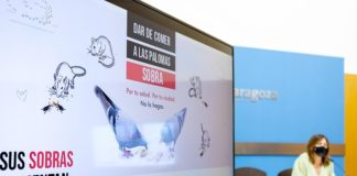 Zaragoza palomas vía pública